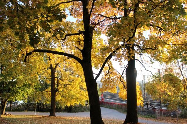 hösten.jpg